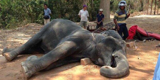 Bei 40 Grad musste Elefantenkuh Touristen tragen – jetzt ist sie tot