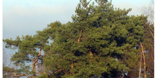 Baum fing gestürzten Betrunkenen auf