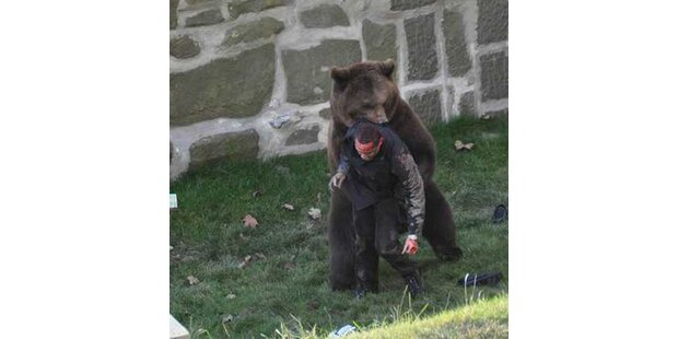Hier attackiert der Bär Finn sein Opfer