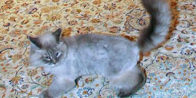 Dorofej First Cat Russland