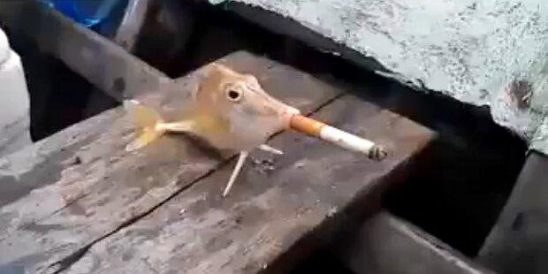 Shitstorm: Fisch raucht eine Zigarette