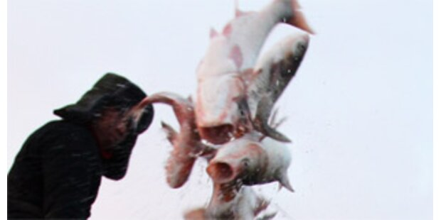 160 Tonnen Ekel-Fisch in Italien beschlagnahmt