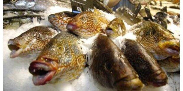 Verdorbener Fisch beunruhigt Italien