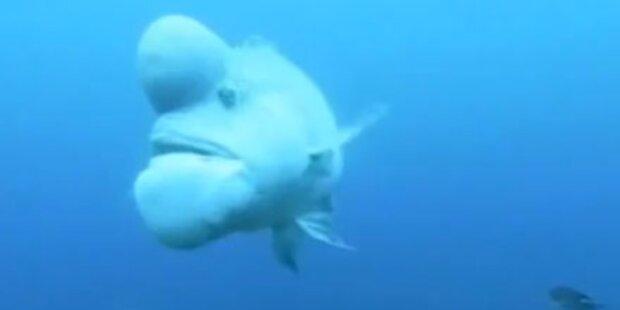 Ist das der hässlichste Fisch der Welt?