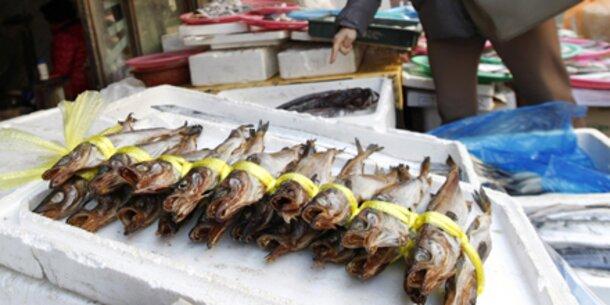 Zunehmende Überfischung der Weltmeere