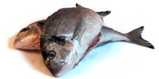 Schweinegülle verursacht Fischesterben