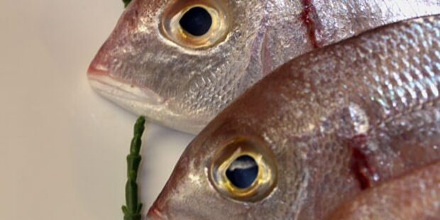 Jeder 10. Frischfisch ist verdorben