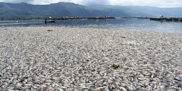 Seltsames Fischsterben