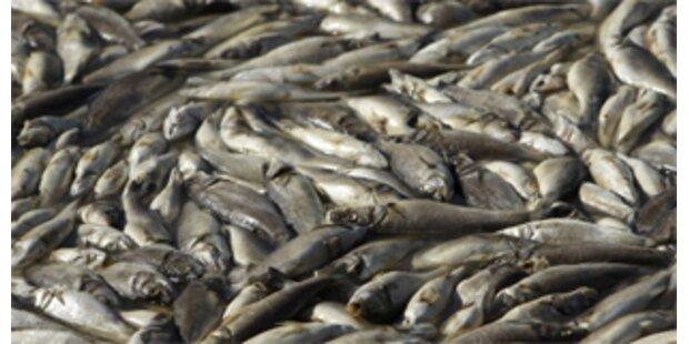 Fischsterben in Bach bei Graz