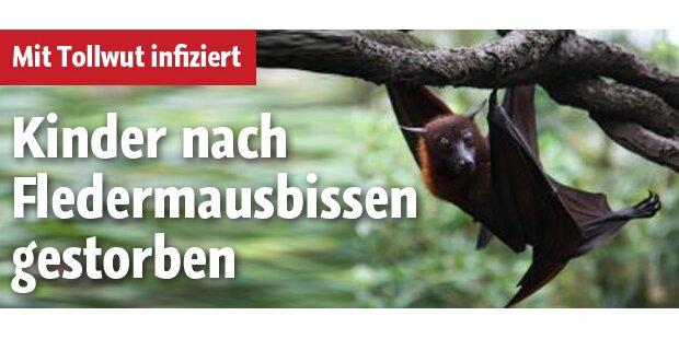 Kinder nach Fledermausbissen gestorben