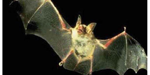 Fledermäuse beißen sieben Kinder tot
