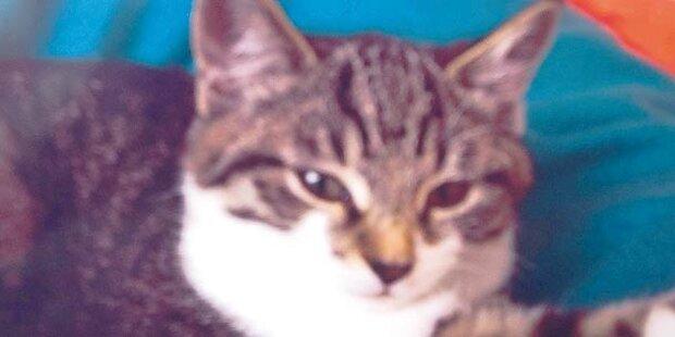 Polizei jagt Katzen-Killer aus der Gnigl
