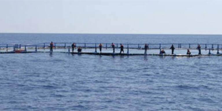 Sechs Tote bei Flüchtlingsdrama vor Malta