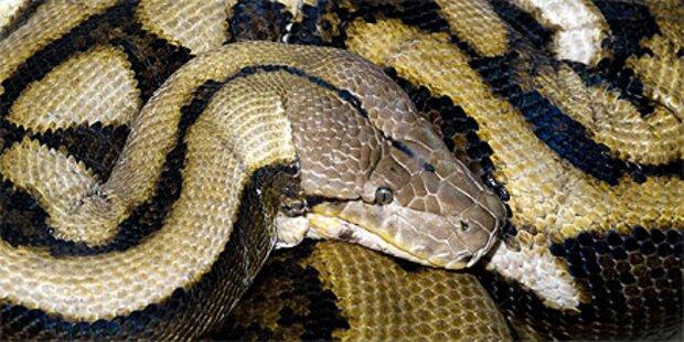 Längste Zoo-Schlange gestorben
