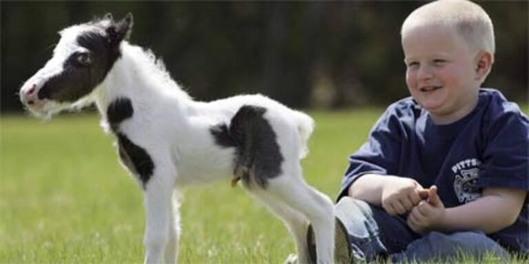 Kleinstes Fohlen der Welt geboren