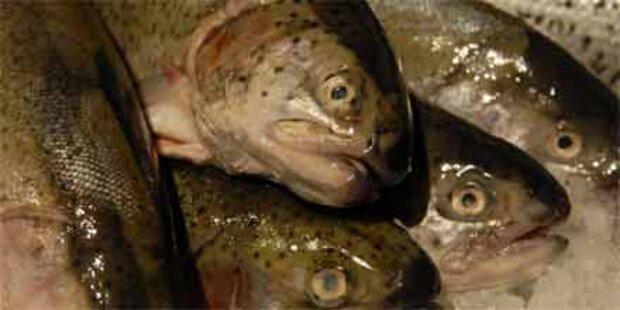 Wieder Listerien: Diesmal im Forellenfilet