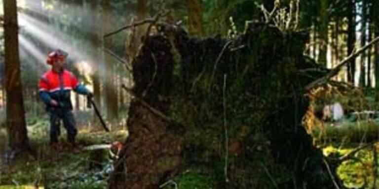 Forstarbeiter von Baum erschlagen