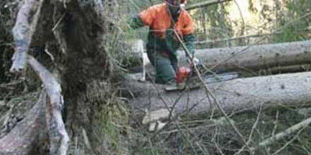 Bei Waldarbeiten von Baum erschlagen