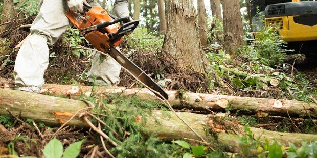 Baum stürzt auf 29-Jährigen