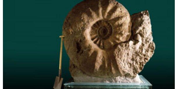 """Versteinerter Ammonit ist """"Fossil des Jahres"""""""