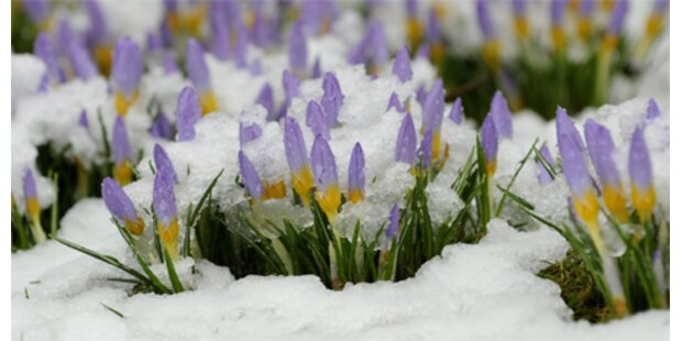 Der Frühling beginnt mit Schnee