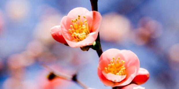 Am 20. März beginnt der Frühling