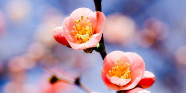 Der Frühling beginnt mit guten Vorsätzen
