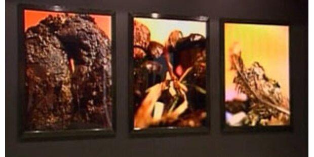 Exkremente-Ausstellung erregt die USA
