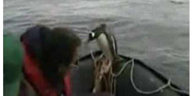 Pinguin rettet sich mit Sprung ins Boot