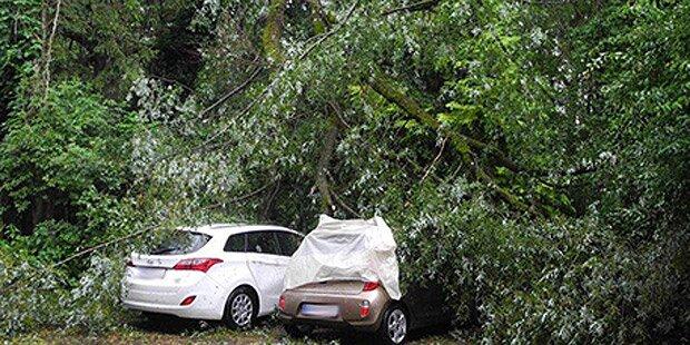 Baum stürzt auf geparkte Autos