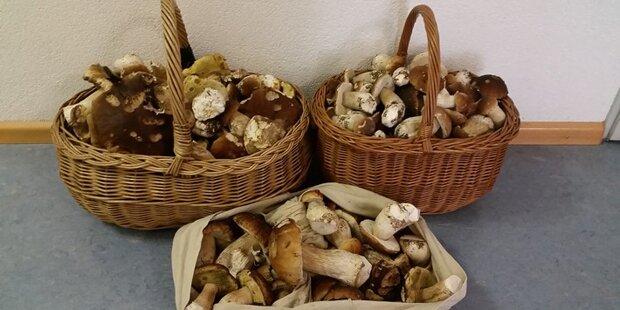 Männer sammeln zu viele Pilze und müssen Strafe zahlen