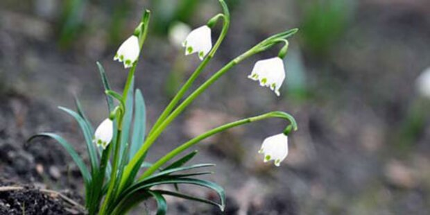 Am Mittwoch kommt der Frühling