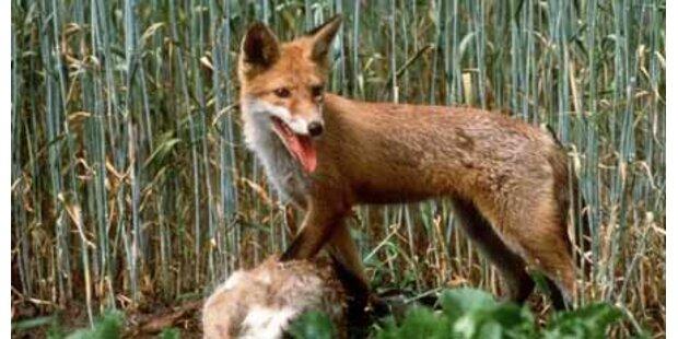 Giftattacken auf Wildtiere in NÖ