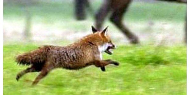 Deutscher Jäger verwechselte Soldat mit Fuchs