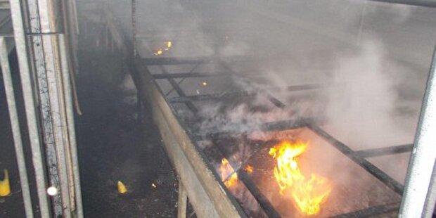 Kerzen lösten Brand in Gärtnerei aus