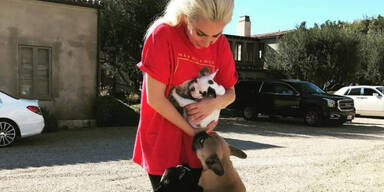 Lady Gagas Hundesitter angeschossen, Bulldoggen entführt