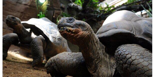 Moskito-Alarm auf den Galapagos-Inseln
