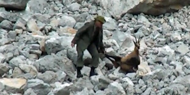 Brutaler Jäger quält verwundete Gams