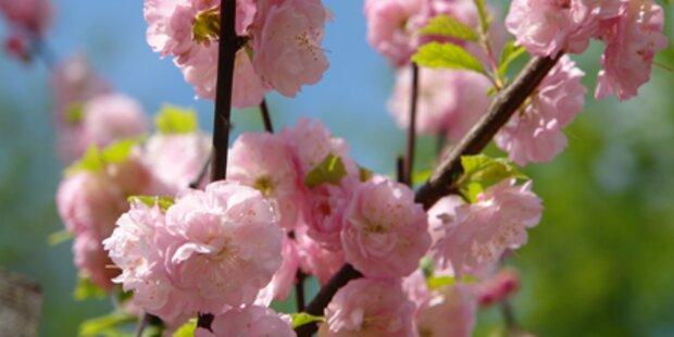 Machen Sie Ihren Garten frühlingsfit