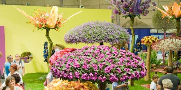 Europas größte Blumenschau