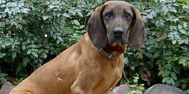Hund verletzt Vierjährige in Salzburg schwer