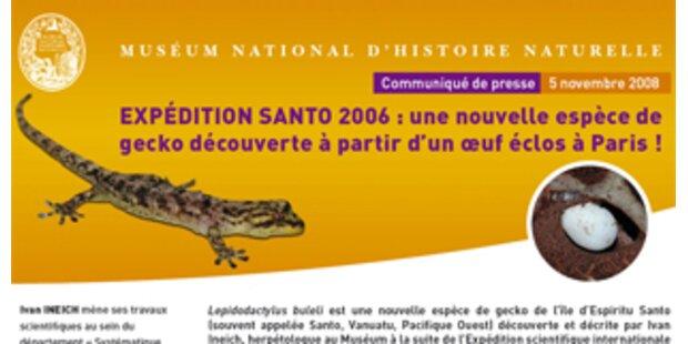 Neue Gecko-Art im Pazifik entdeckt