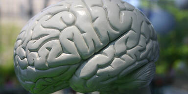 Hang zu Drogen zeigt sich im Gehirn