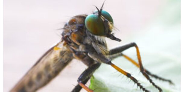 Mit Hausmitteln gegen Mücken, Wespen und Co.
