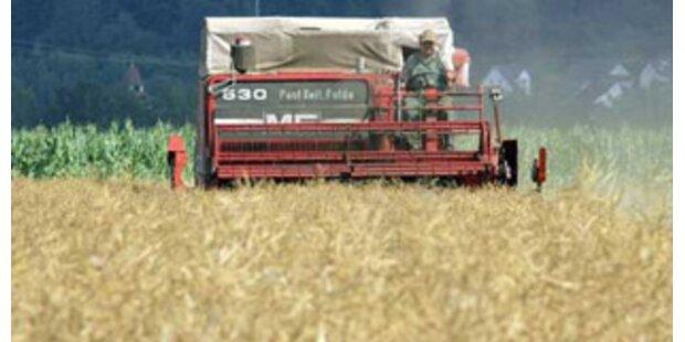 Bauern fahren Rekordernte ein