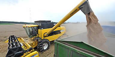 Mieseste Getreideernte seit 40 Jahren