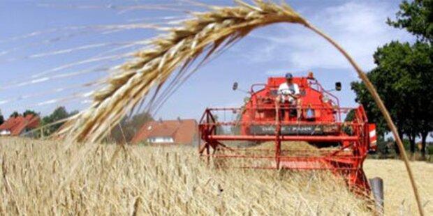 Salzburgs Bauern befürchten Ernteausfälle