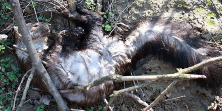 Tierkiller wüten in Niederösterreich