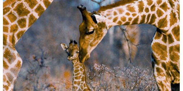 Namibia mit Kindern entdecken
