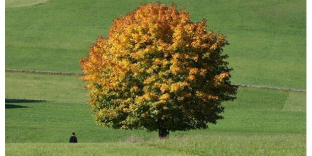 So golden wird heuer der Herbst